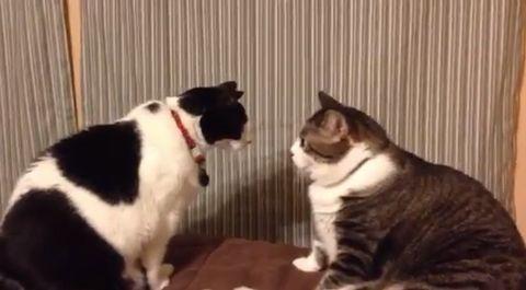 cat_stares_cat.jpg
