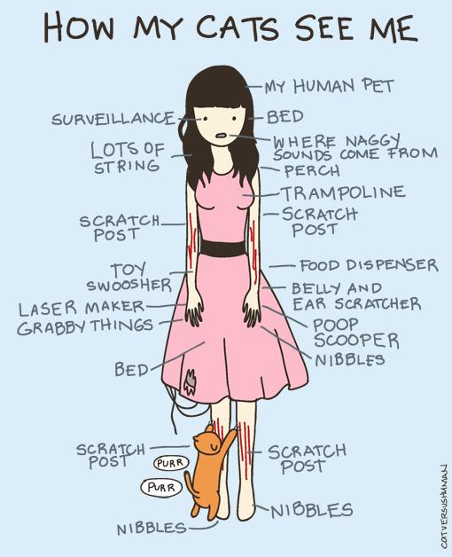 cat_vs_human.jpg
