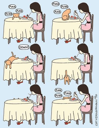 cat_vs_human_08.jpg