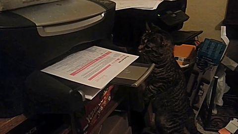 cat_vs_printing_paper.jpg