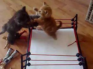 cat_wrestling.jpg
