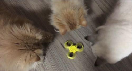 cats_and_handspinner.jpg
