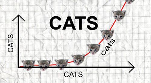 cats_cats.jpg
