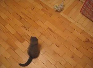 cats_kick.jpg
