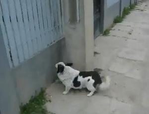 climbing_dog.jpg