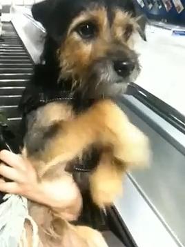 confuse_dog.jpg
