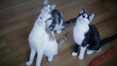 cuckoo_cats.jpg