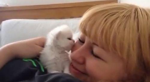 cute_kitten_kisses_my_face.jpg
