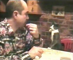 dinner_with_cat.jpg