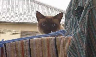 diving_cat.jpg