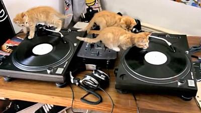 dj_kittens.jpg