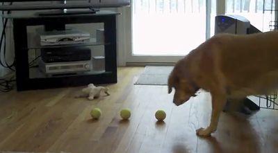 dog_3_balls.jpg
