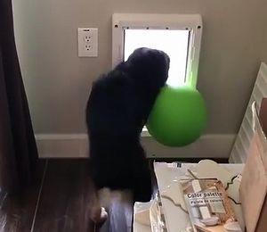 dog_fails.jpg