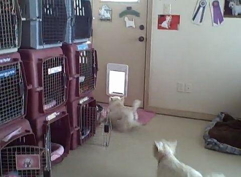 doggie_door.jpg
