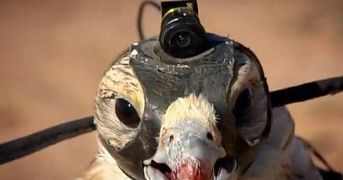 falcon_eye01.jpg