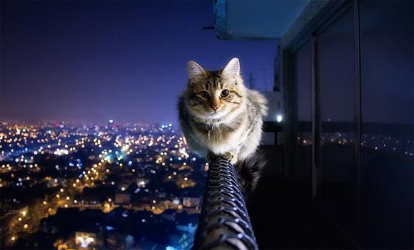 fearless_cat.jpg