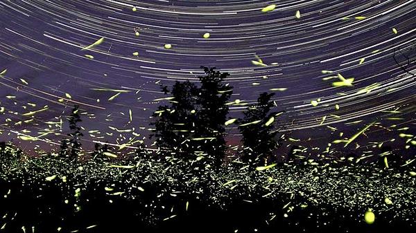 firefly_star_02.jpg