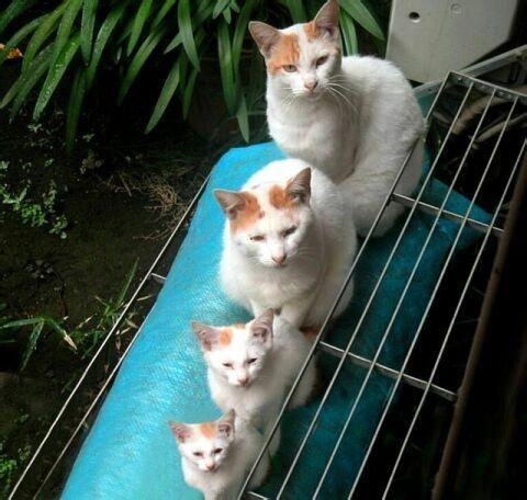four_cats.jpg