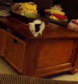 funny_kitten.jpg