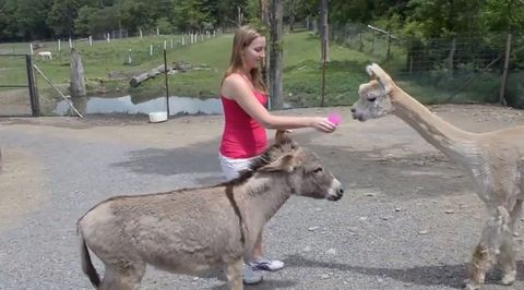 greedy_donkey.jpg