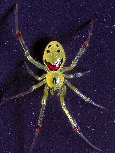 happy_face_spider_02.jpg