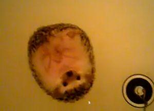 hedgehog_bath.jpg