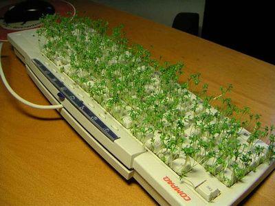 keyboard_prank.jpg