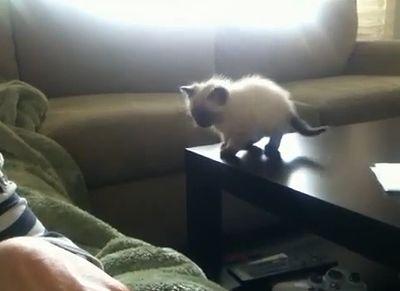 kitten_fall.jpg