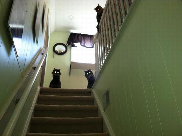 laser_cats.jpg