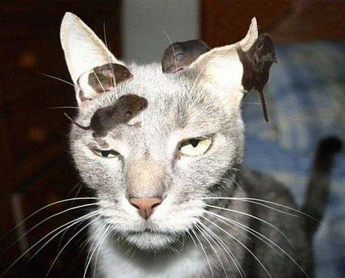 laziest_cat.jpg