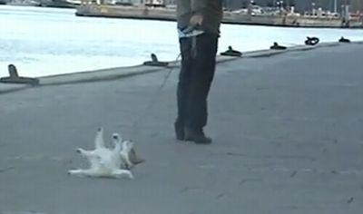 lazy_dog.jpg