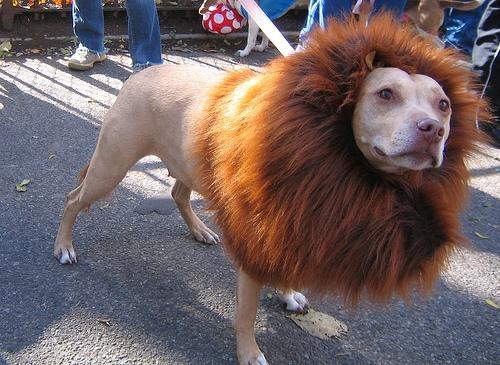 lion_dog.jpg