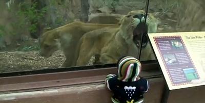 lion_eat_baby.jpg