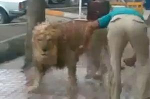 lion_wash.jpg