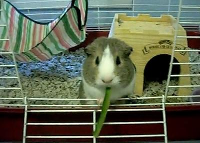 marmot_eat_cucumber.jpg