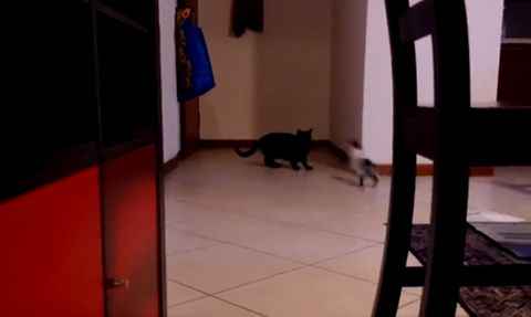 parkour_cat.jpg