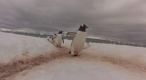 penguin_highway.jpg