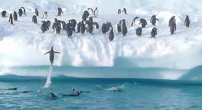 penguin_jump.jpg