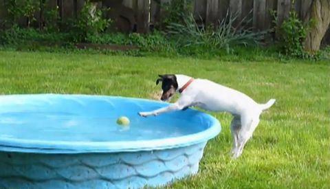 persistent_dog.jpg