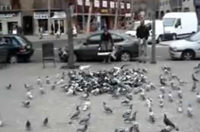 pigeon_net.jpg