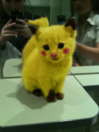 pikachu_cat.jpg
