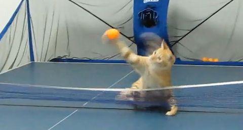 pingpong_cat.jpg