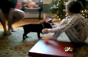 puppies_gift.jpg