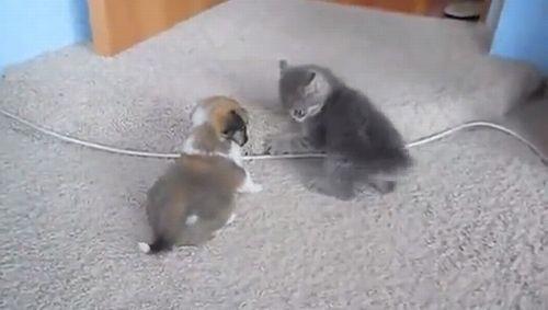 puppy_vs_kitten.jpg