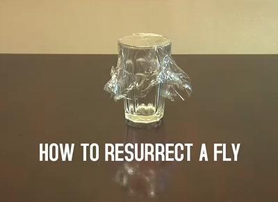 resurrect_fly.jpg