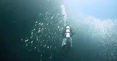 sardine_dance.jpg
