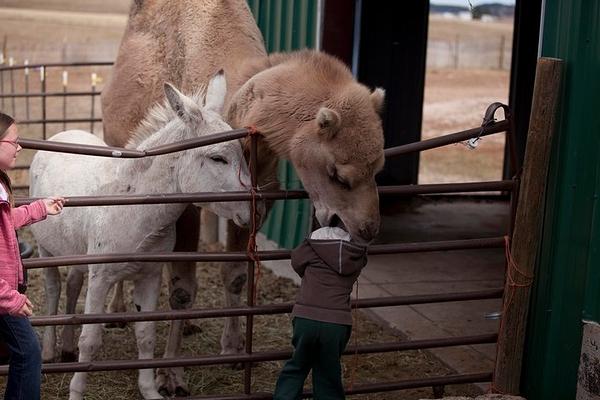 scare_camel.jpg