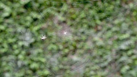 spider_timelapse.jpg
