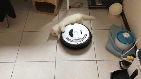 spinning_cat.jpg