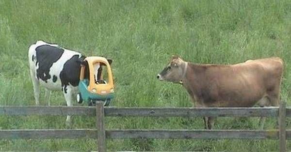 strange_cow.jpg